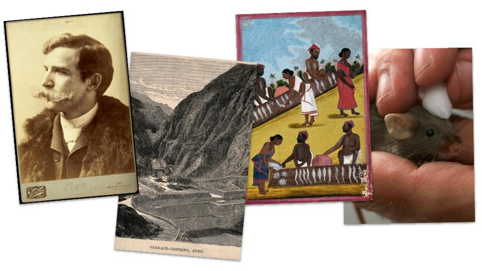 Four images, L-R: a sepia-toned photo of a man with a large moustache; coloured illustrations of various mountains; people gathering at a fish market; a small black rodent on a paper background.